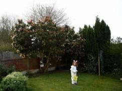 """Prawo UK: Co zrobić, gdy krzewy i drzewa sąsiadów """"włażą"""" nam do ogrodu?"""