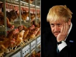 Chlorowane kurczaki z USA mogą znaleźć się w brytyjskich supermarketach. Czy z powodu lockdownu nie umyka nam coś ważnego?