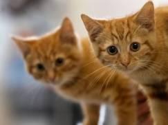 Wszystkie koty w UK będą musiały posiadać podskórne mikroczipy? Zobacz nowe plany rządu