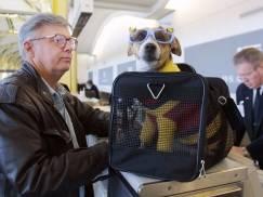 Podróż ze zwierzakiem do UK od 1 stycznia 2021. Jakie dokumenty są potrzebne i co załatwić przed wyjazdem?