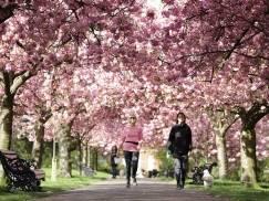 Najpiękniejsze parki w Londynie, które koniecznie trzeba zobaczyć. Oto 5 idealnych miejsc na wiosenny spacer [GALERIA]