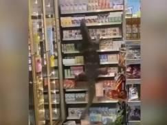 Godzilla wtargnęła do sklepu spożywczego! To WIDEO podbija sieć