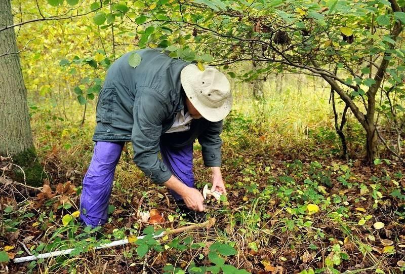 Zbieranie grzybów w UK - na jakie okazy zwrócić uwagę? [wideo]