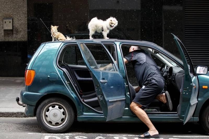Brexitowiec apeluje do rządu, aby swobodny przepływ osób po okresie przejściowym nadal obowiązywał… jego psy