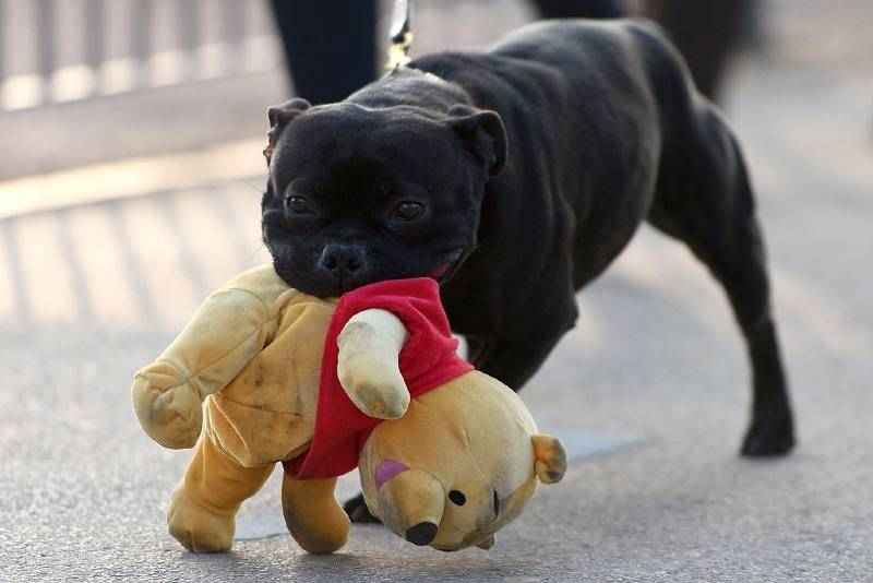 Walijczyk zabił sąsiada. Panowie pobili się o głośno szczekającego psa