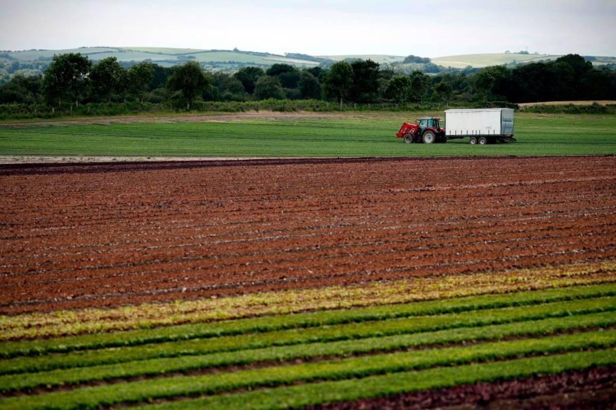 Rolnicy w UK będą mogli zastosować pestycydy zakazane w UE! Rząd dał zielone światło dla groźnych środków chemicznych