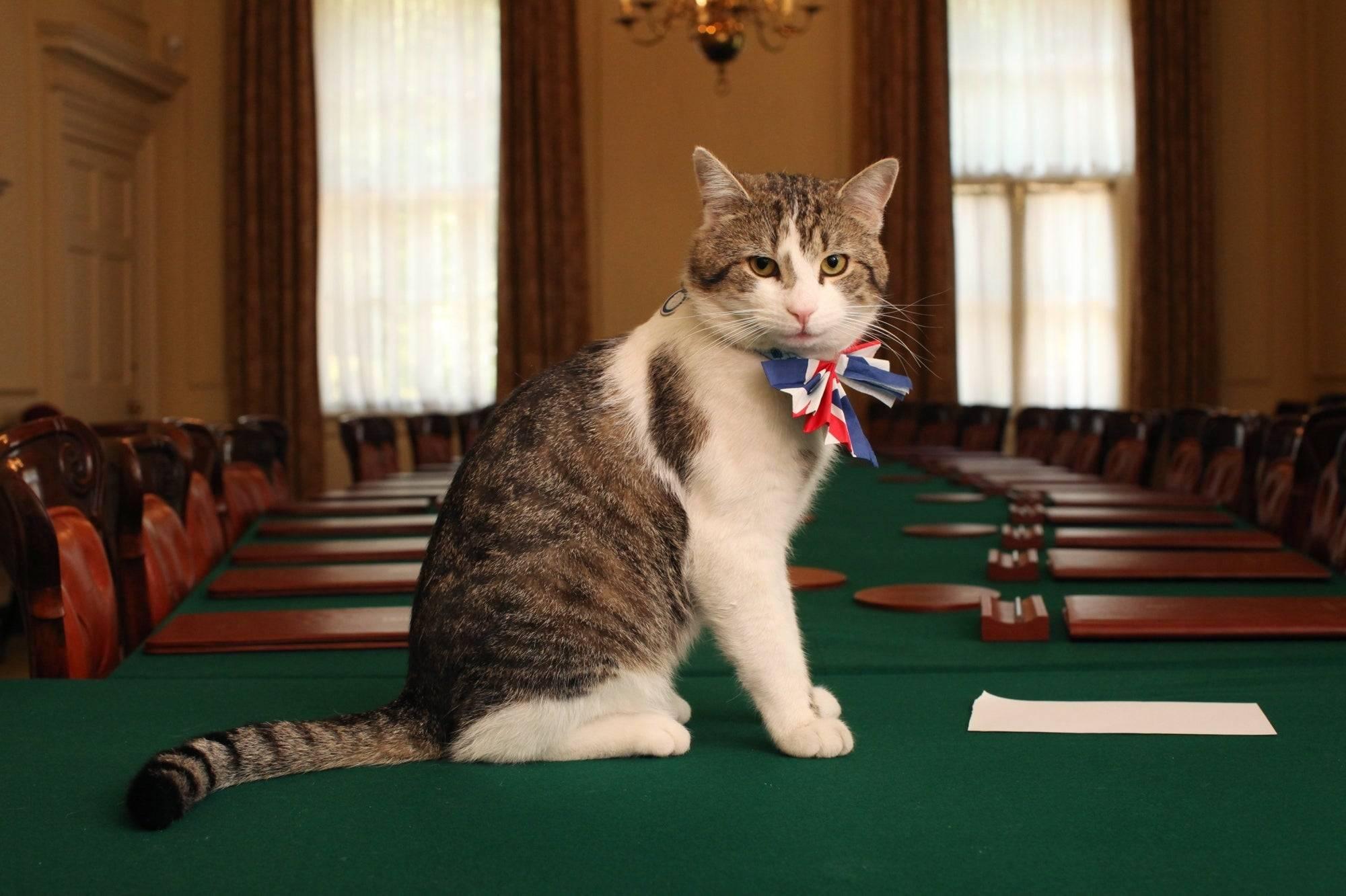 Kot Larry świętuje 10-lecie jako Główny Myszołap na Downing Street. Jaka jest historia oficjalnego stanowiska Chief Mouser?