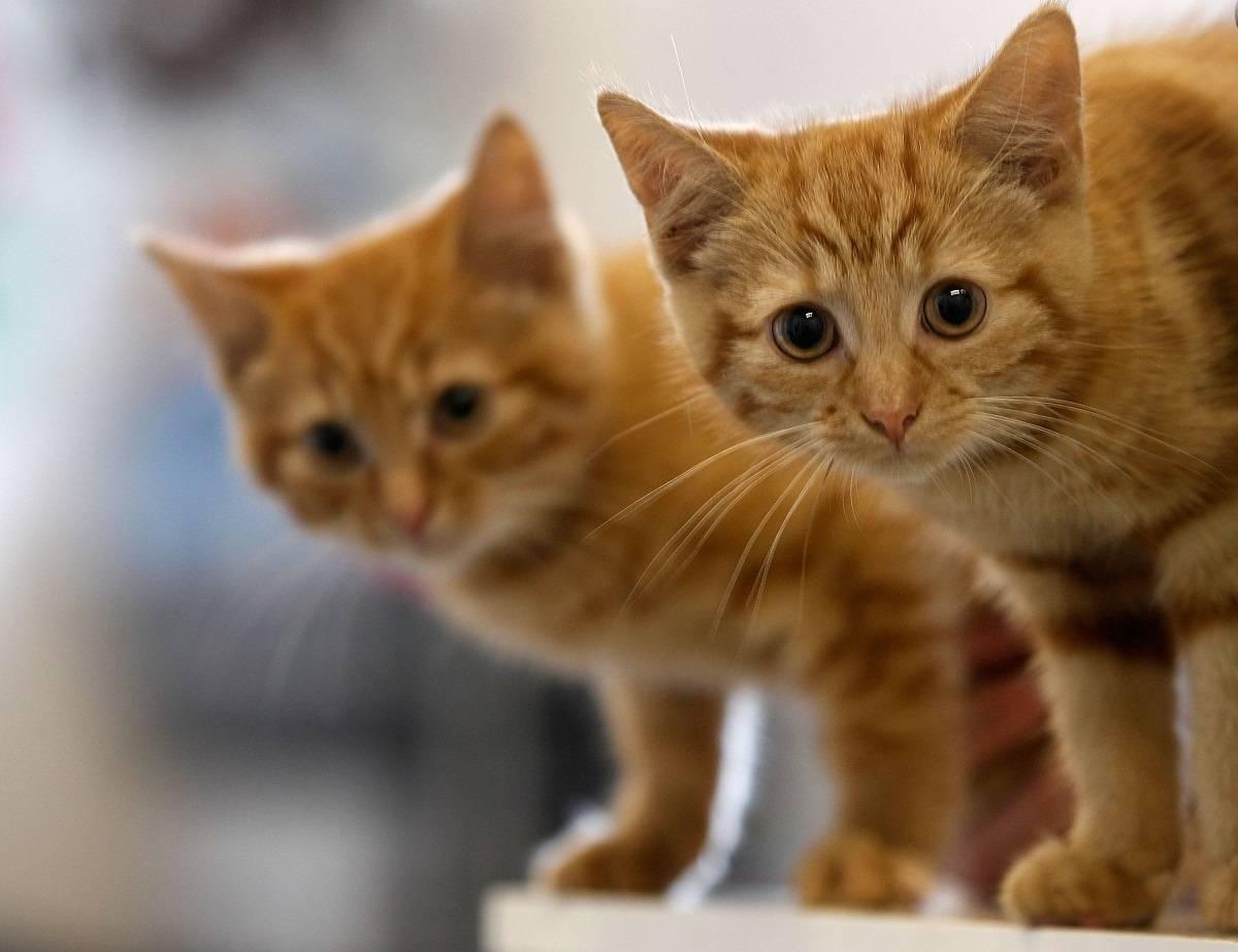 Coventry: 26-letnia Polka skazana na więzienie za prowadzenie nielegalnej hodowli kotów